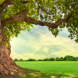 Psalm 1: Be A Tree Of Life